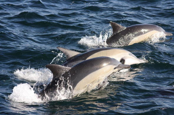 View dolphins in Hermanus.
